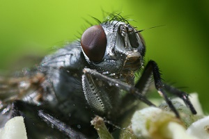Crime-busting maggots: how insects can be the key to unlocking murder cases