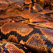 Snake fang study brings new insights