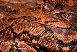 Snake fang study brings new insights