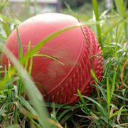 Cricket fast bowling researcher elected to SA Young Academy of Science