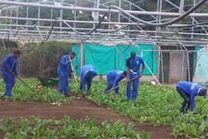 Agriculture defies odds to create jobs in tough climate