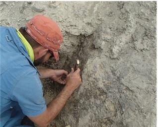 SU Sedimentologist helps uncover rare dinosaur nesting site in Central Utah (USA)