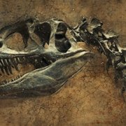 Two new Chinese dinosaurs discovered