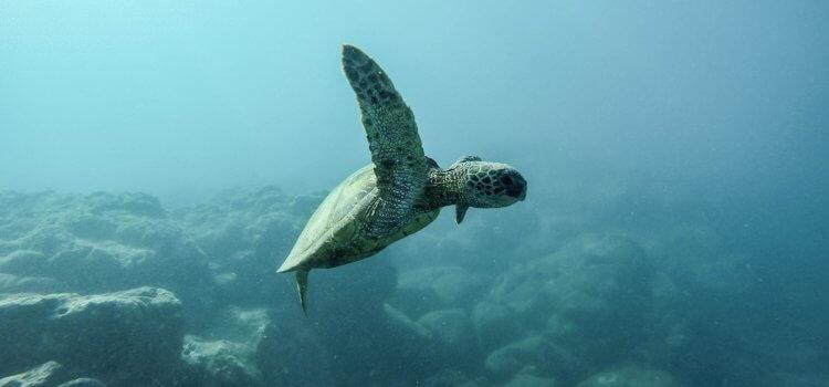 WSU hosts R40m marine pollution rescue facility