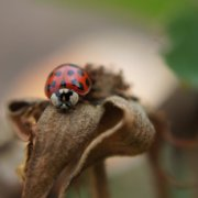 Scientists warn of increasing threats posed by invasive alien species