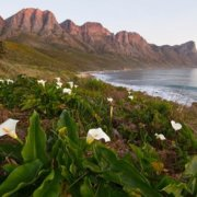 New framework to protect World Heritage Sites against invasive species