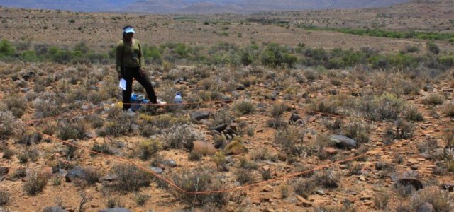 Tracking dung beetle diversity in the Karoo