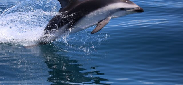 First estimate of Namibia's dolphin populations