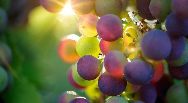 96% of Elsenburg winemaking graduates are employed